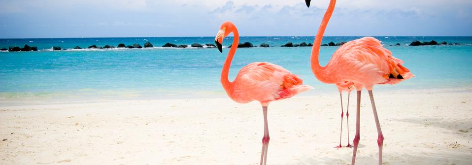 Caribbean_Aruba_006