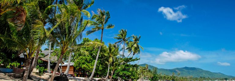 Palms on the beach, Ko Samui, Thailand iStock_000022017556_Medium-2