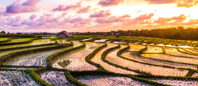Bali Rice Fields Sunset iStock_000055009954_Large-2