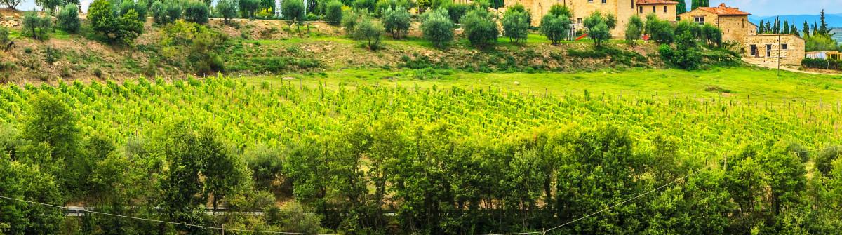 Chianti vineyard landscape with stone house,Tuscany,Italy,Europe