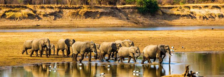 Zambia Sambia Elefanten Elephants iStock_000050334986_Large-2