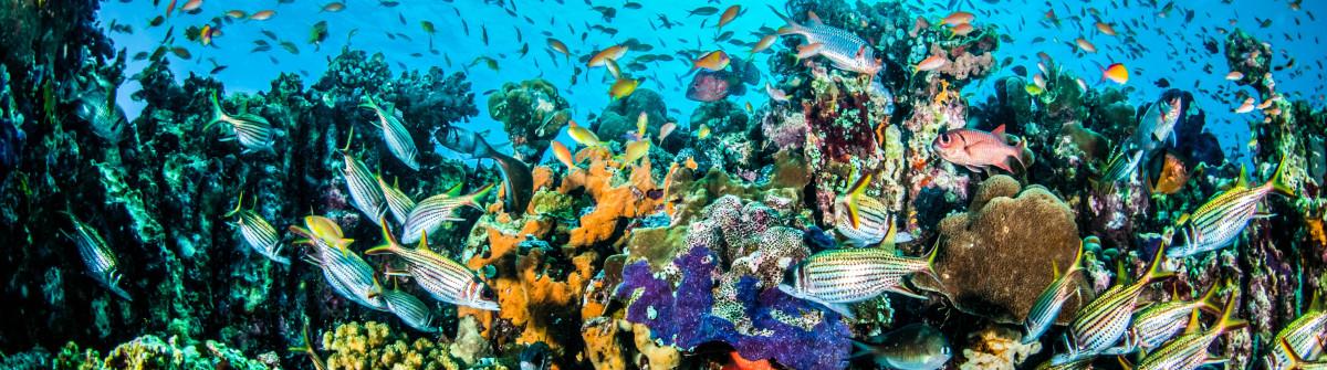 Various coral fishes, Gili, Lombok, Nusa Tenggara Barat, Indonesia underwater