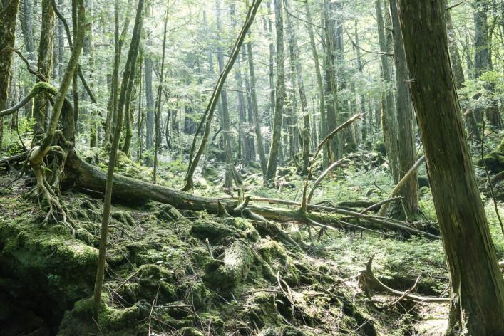 Het zelfmoordbos in Japan