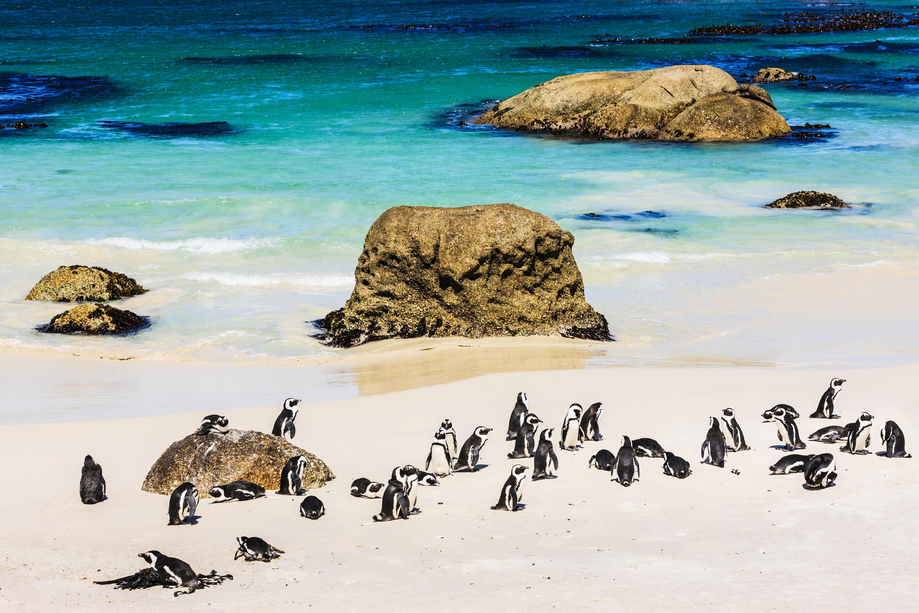 Pingu 239 Ns Een Bezoekje Brengen In De Wildernis Holidayguru Nl