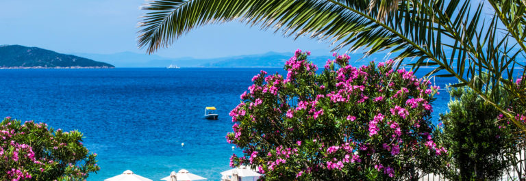 Palm, Pink flowers, beach, umbrellas and blue sea