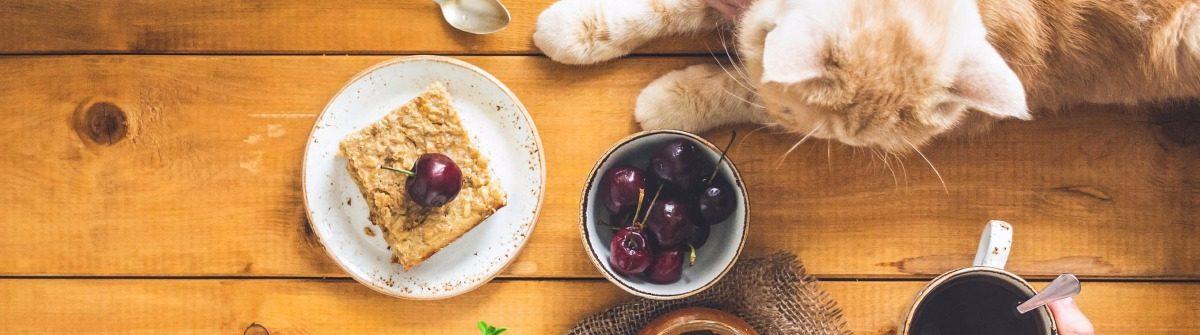 kattencafés wereldwijd