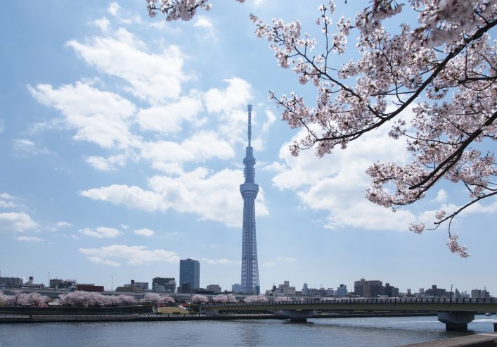 Image of the Tokyo sky tree and cherry blossom.