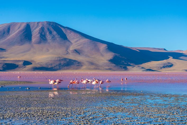 "Pink flamingos at ""Laguna Colorada"" on the Bolivian Andes"