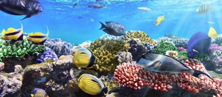 Resort met aquapark in egypte