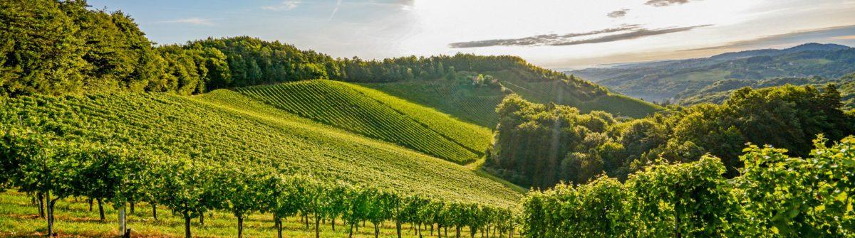 Wijnregio's in Frankrijk