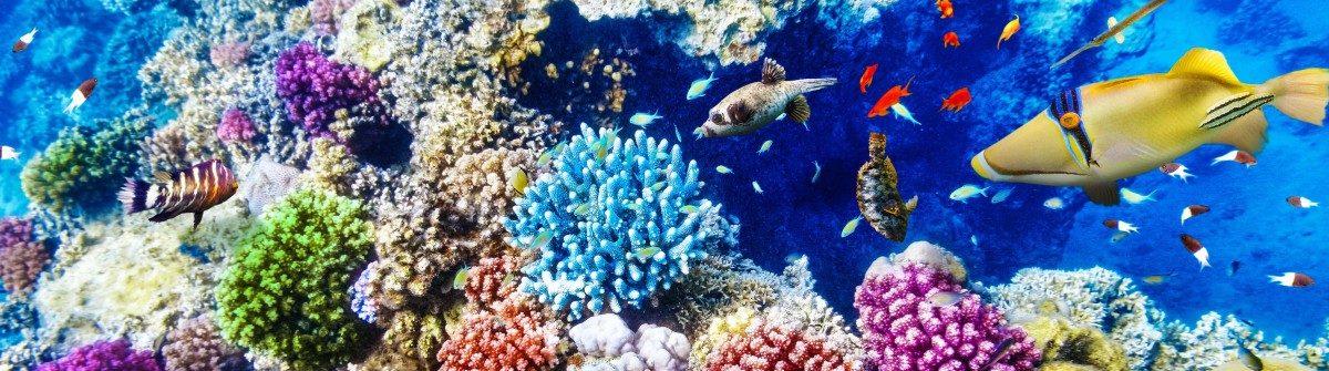 Great Barrier Reef dood