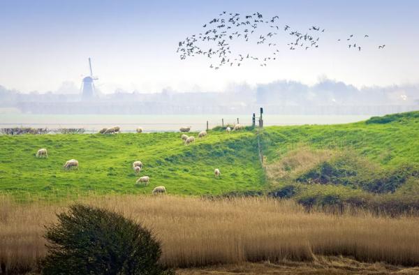 Natuur in Zeeland