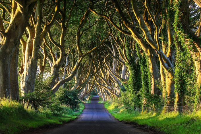 Game of Thrones Noord-Ierland - de Dark Hedges