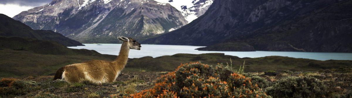 Paine-Nationalparks-Südamerika-iStock-117149827-1200×335