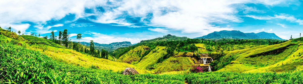 Sri Lanka Fields iStock_000065212315_Large-2-2