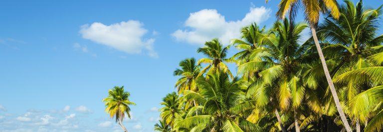 vakantie jamaica