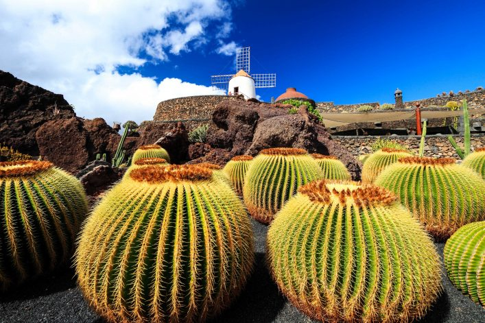 Cactus garden with windmill