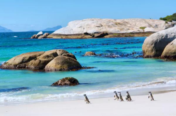 Penguins spotten in Zuid-Afrika