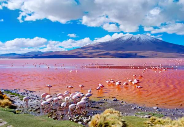 rondreis peru bolivia