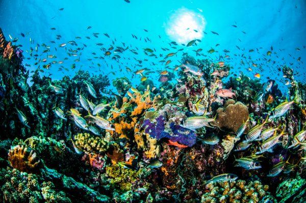 Onderwaterwereld van Indonesië
