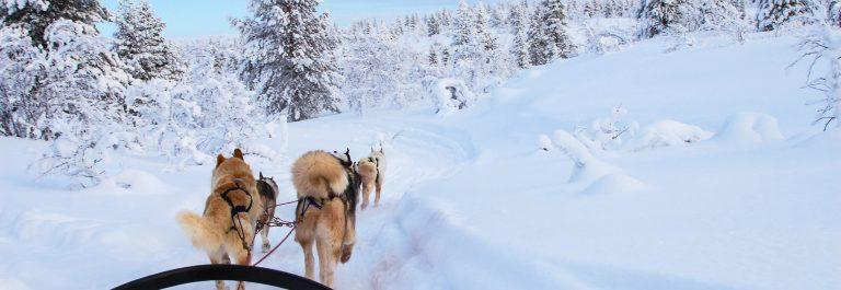 rondreis Lapland husky tocht