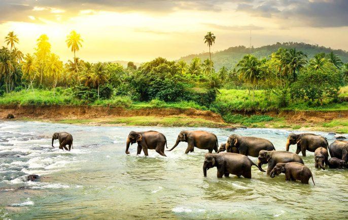 Olifanten in rivier in Sri Lanka