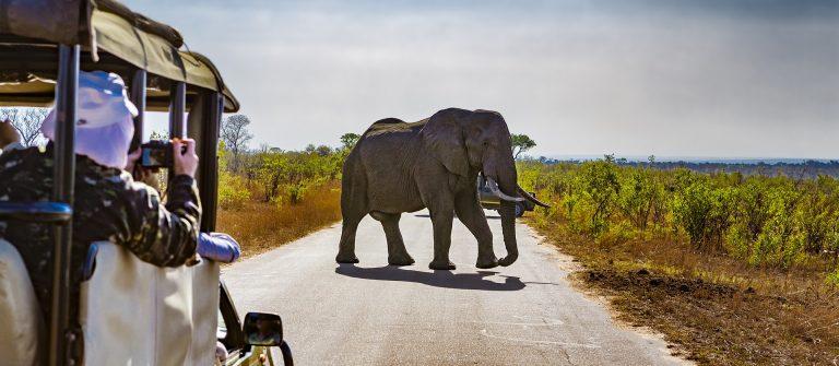 Olifant in het Kruger National Park