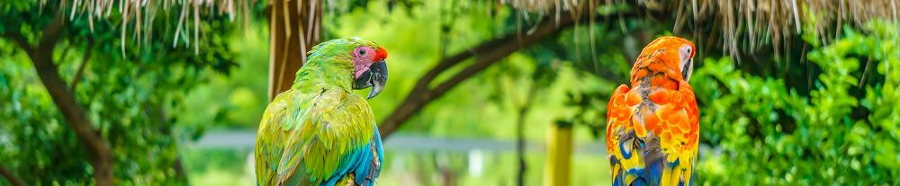papegaaien op jamaica