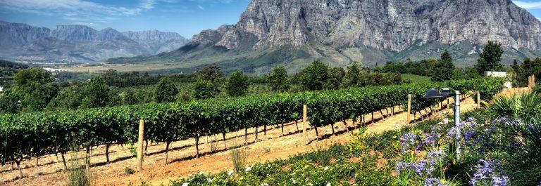 Wijngaard Zuid-Afrika