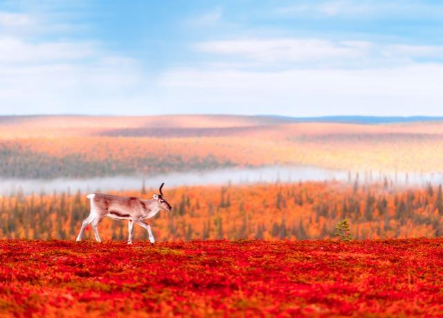 Natuur in Lapland