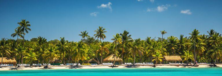 Parlmbomen op strand Dominicaanse Republiek