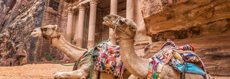 Kamelen in Petra Jordanie