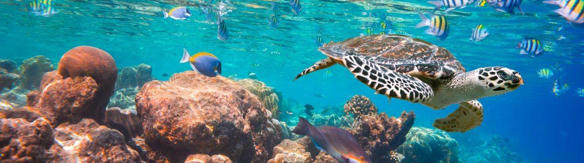 Koraalrif Malediven