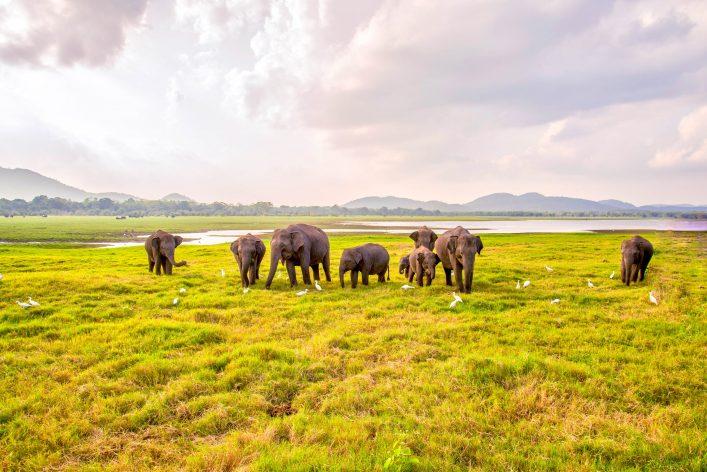 olifanten in Yala National Park