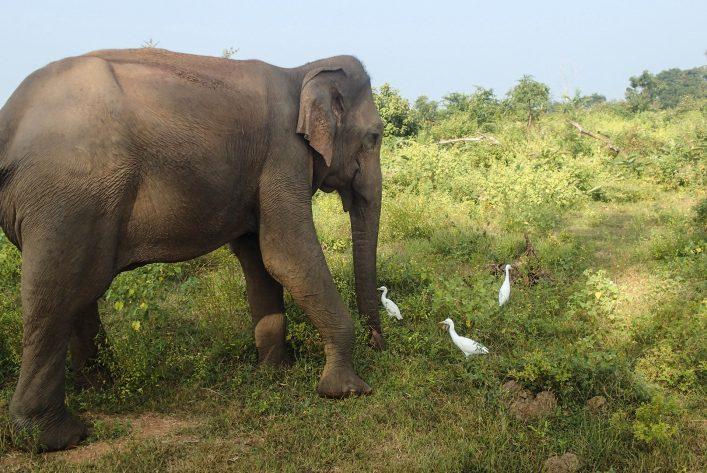 Een olifant