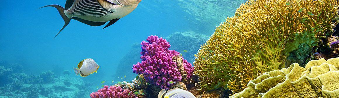Rode Zee Voyage Prive