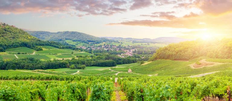 wijnregio van Bourgondie