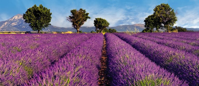 Vakantie Provence Voyage Prive