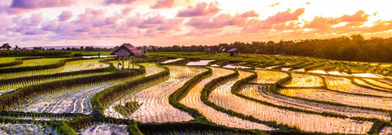 Bali Rice Fields Sunset iStock_000055009954_Large-2