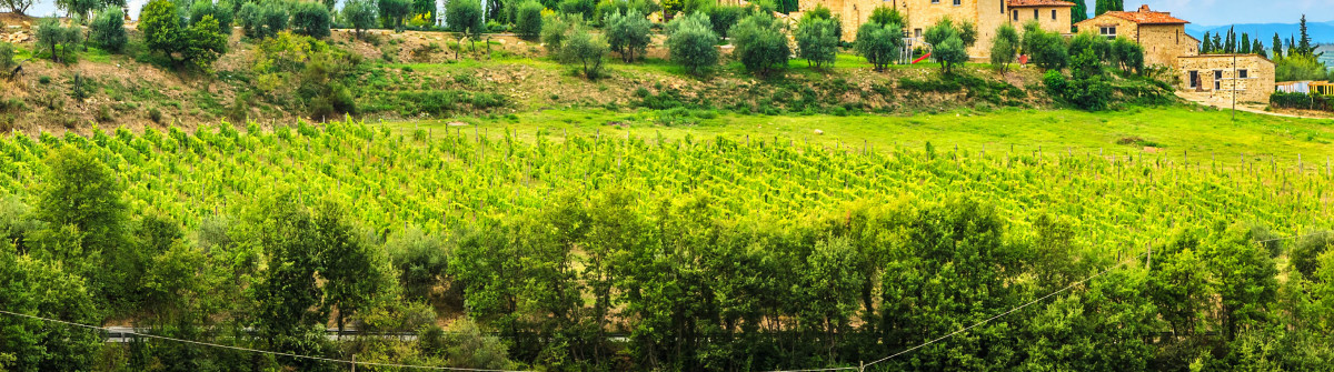 Chianti vineyard landscape with stone house,Tuscany,Italy,Europe