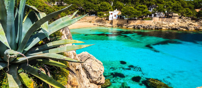 agave-palnt-beach-bay-azure-turquoise-sea-water-hill-pine-tree-cala-gat-majorca-island-spain-shutterstock_143322982-2